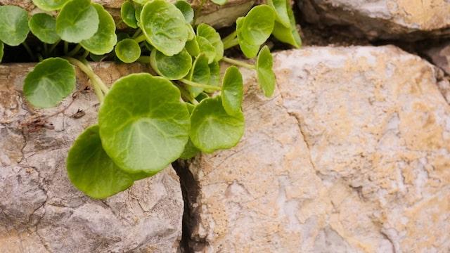 Le désespoir des Médecins résolu par les « Plantes médicinales anti-démangeaison » !