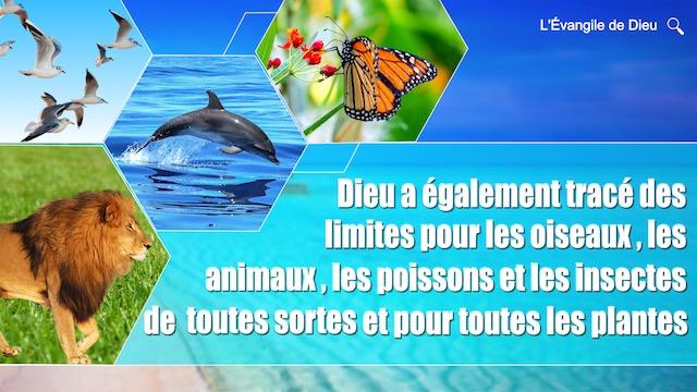 Dieu a également tracé des limites pour les oiseaux, les animaux, les poissons et les insectes de toutes sortes et pour toutes les plantes
