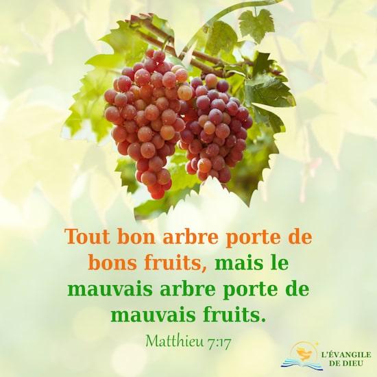 Matthieu 7:17 Tout bon arbre porte de bons fruits, mais le mauvais arbre porte de mauvais fruits.