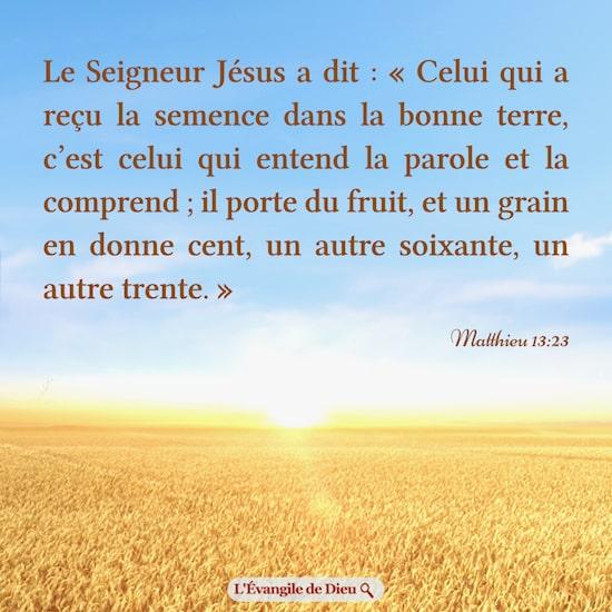Évangile du jour — Graines et fruits | L'Évangile de Dieu