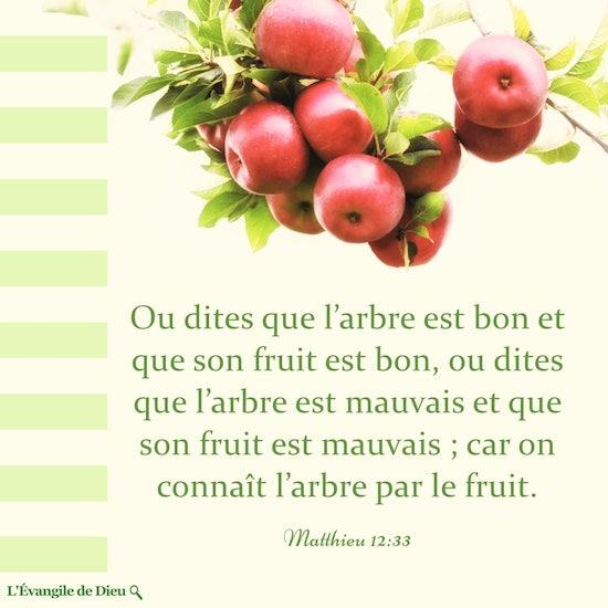 Évangile du jour — Matthieu 12-33