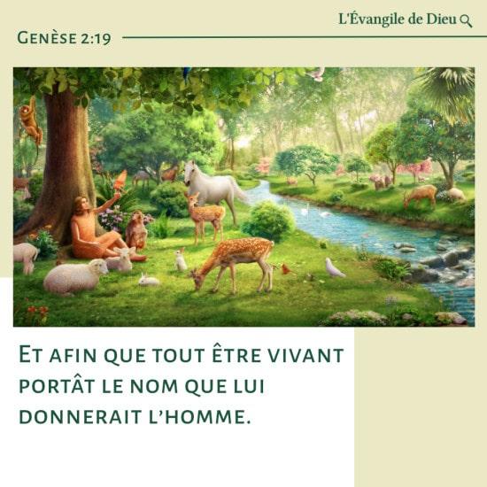 Évangile du jour — L'homme a donné à toutes les créatures vivantes leurs noms